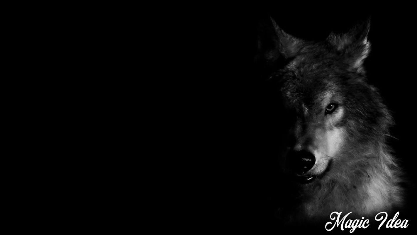 Black Wolf Wallpaper Für Android Apk Herunterladen