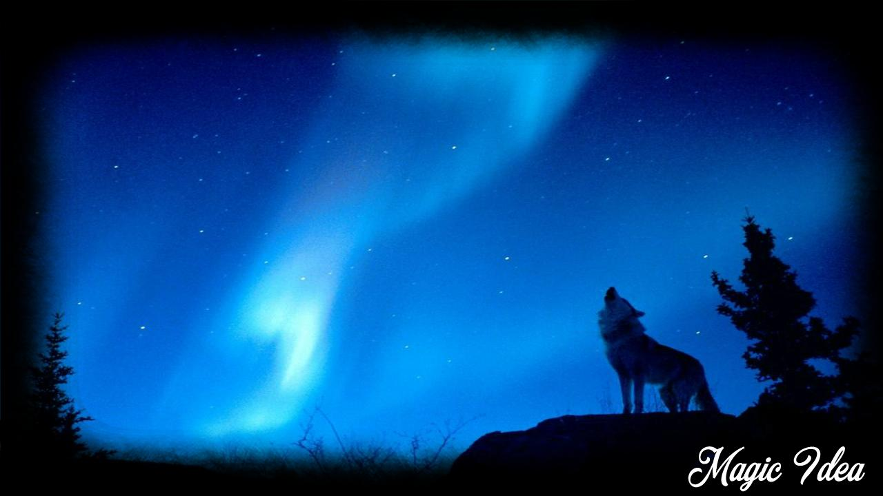 Wolf Moon Wallpaper For Android Apk Download