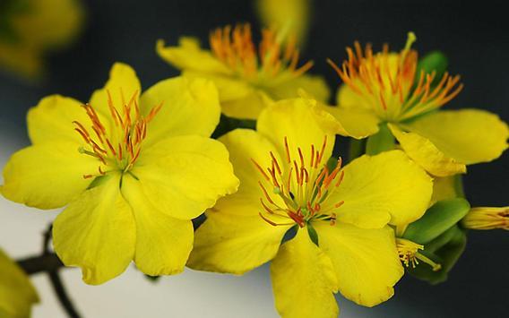 Mai Flower Live Wallpaper screenshot 6