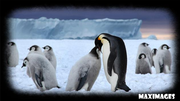 Penguin Wallpaper apk screenshot