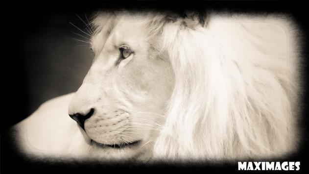 White Lion Wallpaper poster
