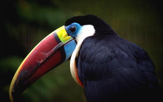 Toucan Bird Live Wallpaper screenshot 2