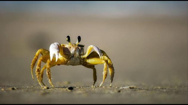 Crab. Nature Wallpapers apk screenshot