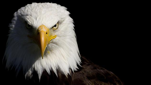 Washington Bird. Animals Wallpapers apk screenshot