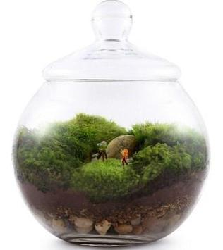 Moss Terrarium Ideas screenshot 1