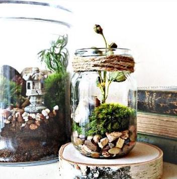 Moss Terrarium Ideas screenshot 2