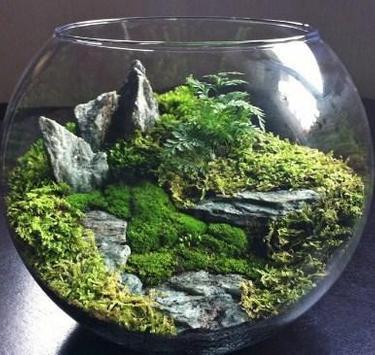 Moss Terrarium Ideas screenshot 3