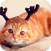 Reindeer cat. Live wallpapers icon