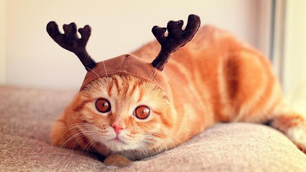 Reindeer cat. Live wallpapers poster