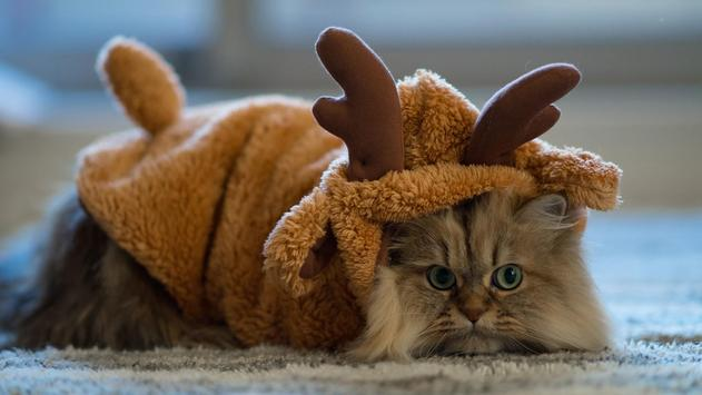 Reindeer cat. Live wallpapers apk screenshot