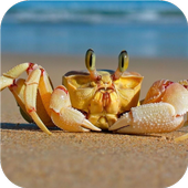 Crab. Live wallpapers icon