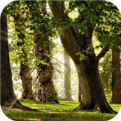 Forest tree. Live wallpapers icon