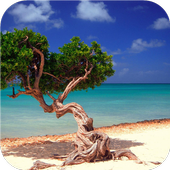 Amazing beach. Live wallpapers icon