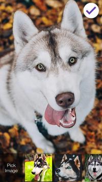 Siberian Husky Dog Lock & AppLock Security screenshot 2