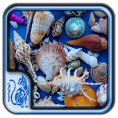 DIY Crafts Shells Design Ideas icon