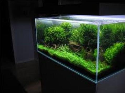 Diy Aquascape Layout For Android Apk