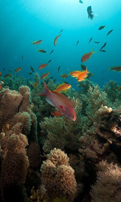 Ocean Fish Live Wallpaper For Android Apk Download