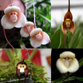 Orchid Gallery icon