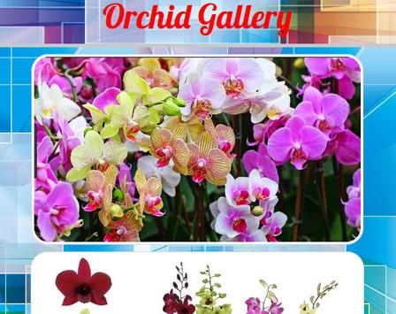 Orchid Gallery poster