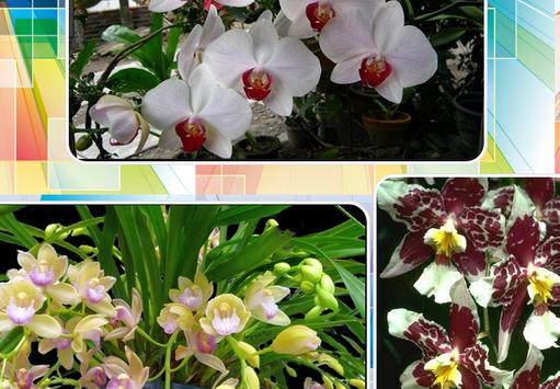 Orchid Gallery screenshot 1