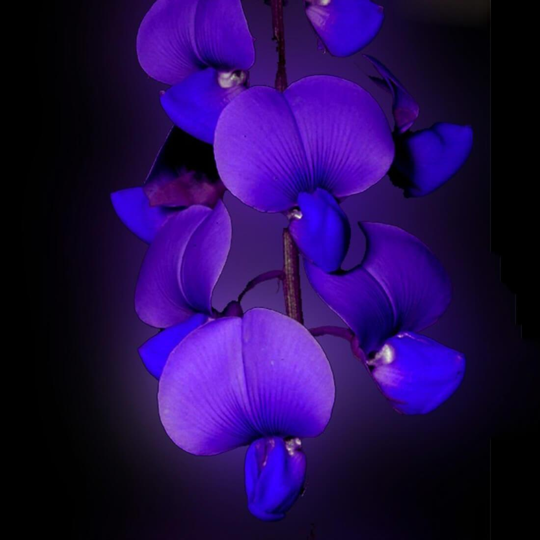 Orchid Live Wallpaper For Android