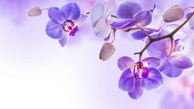 Orqu dea papel de parede apk baixar gr tis for Orchidea acqua