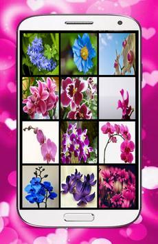 Orchid Flower Wallpaper screenshot 2