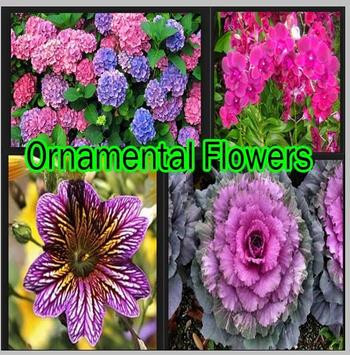 Ornamental Flowers poster