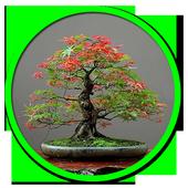 Decorative plants icon
