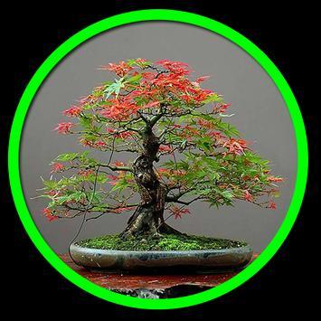 Decorative plants poster