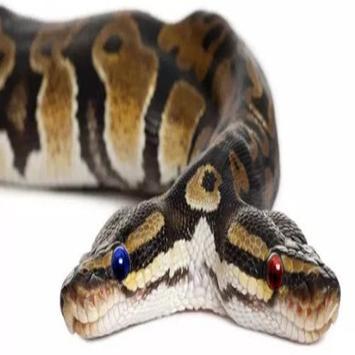 Ornamental Snake apk screenshot
