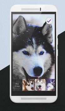Hasky Dog Furry Puppies Husky Adorable Lock Screen screenshot 2