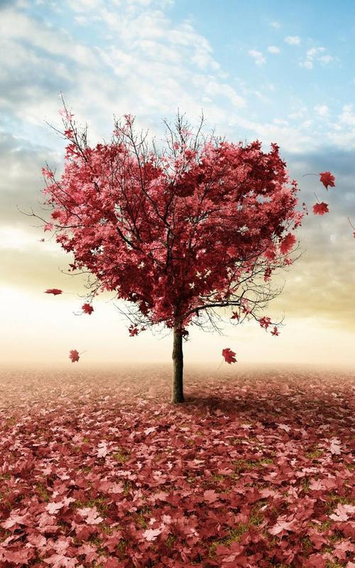 Herbst Liebe Hintergrundbilder Fur Android Apk Herunterladen