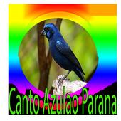 Azulão Canto Paraná Puro icon