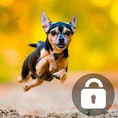 Cute Chihuahua Husky Dog Puppy Screen Lock icon