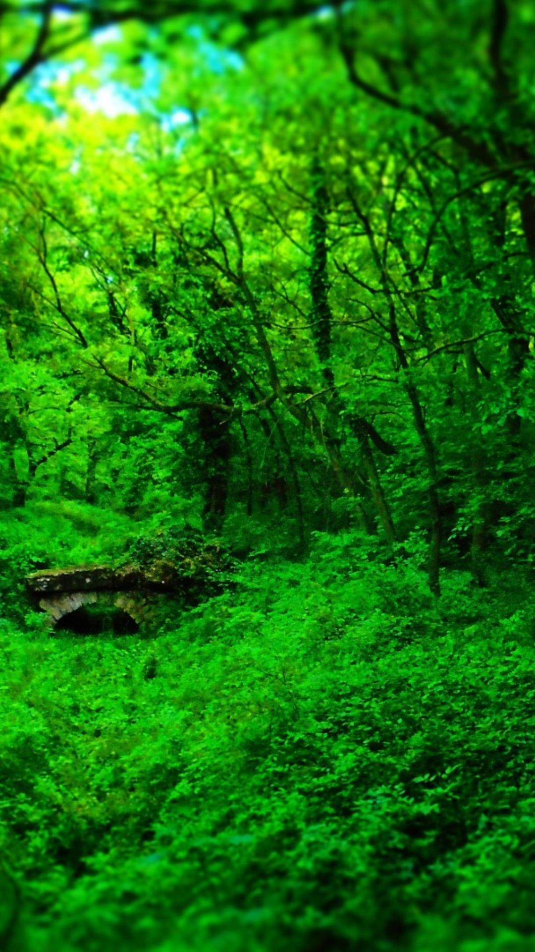 Forest background HD wallpaper for Android - APK Download