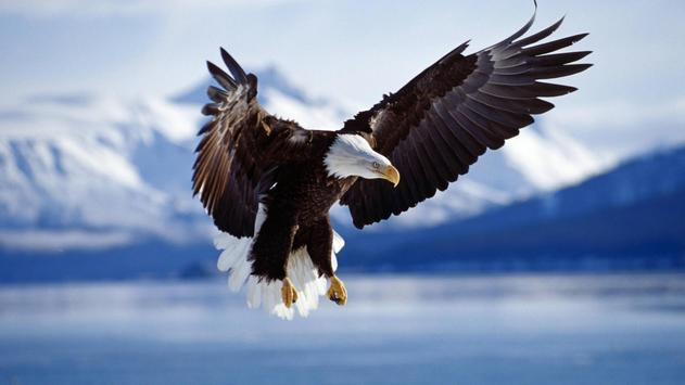 Flying eagle live wallpapers apk download free personalization live wallpapers apk screenshot flying eagle live wallpapers apk screenshot altavistaventures Images