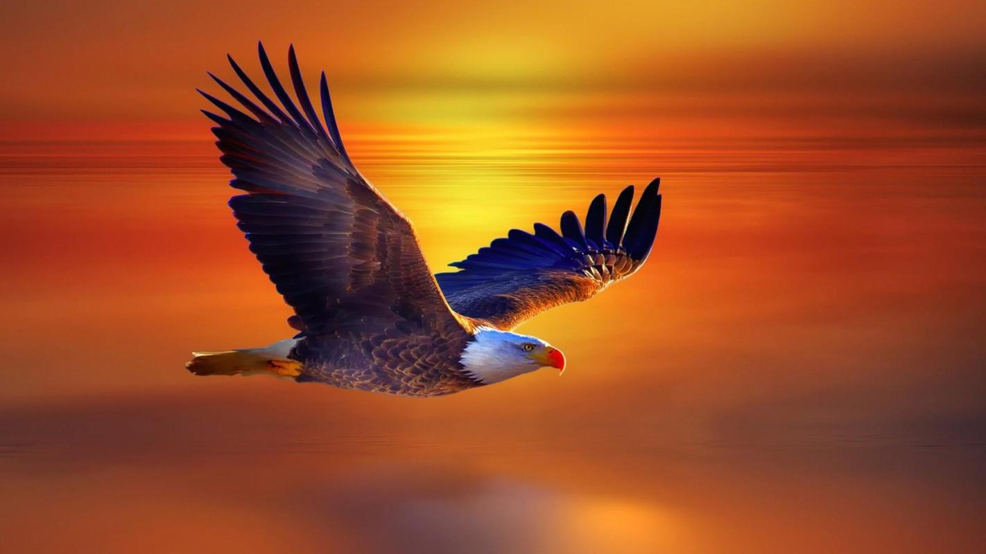Live Wallpapers 6 Flying Eagle 7