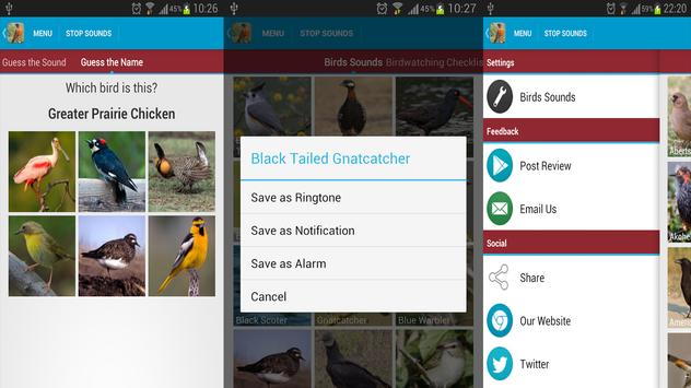 American Three Toed Woodpecker Bird Sounds screenshot 5