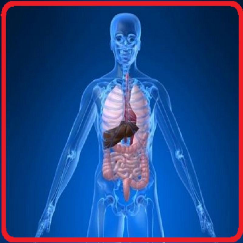 Anatomi Tubuh Manusia Lengkap 3