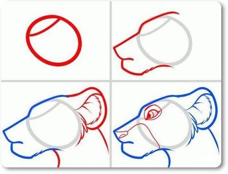 Animal Drawing Tutorial screenshot 2