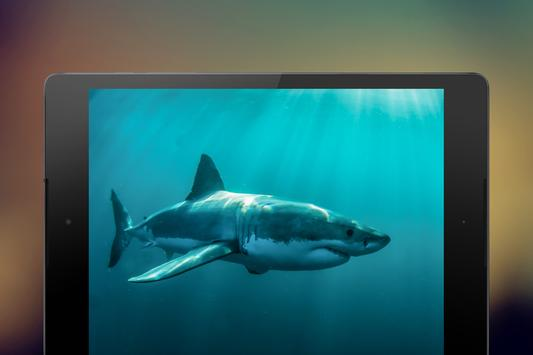 Shark Wallpapers screenshot 9