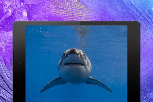 Shark Wallpapers screenshot 19