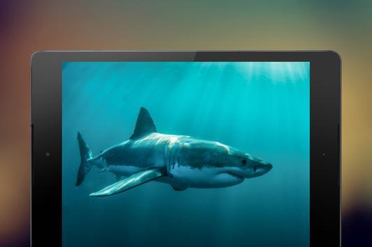 Shark Wallpapers screenshot 1