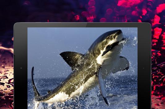 Shark Wallpapers screenshot 21