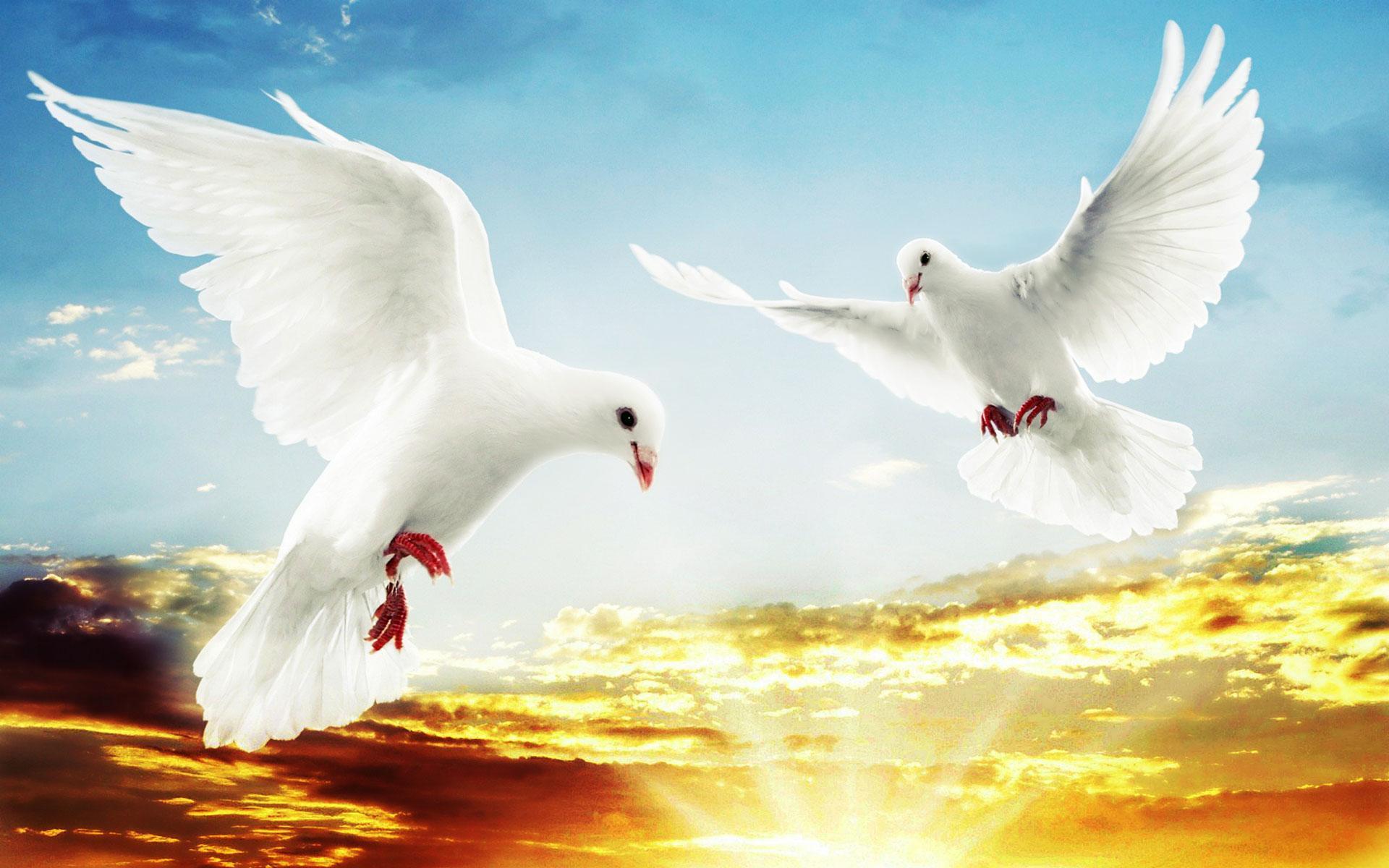 Открытка открыткой, открытки голубь в небе