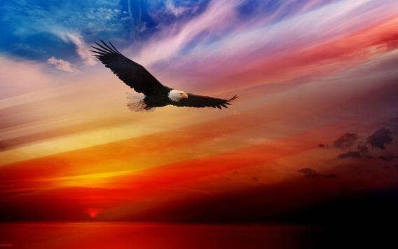 Eagles Live Wallpaper Apk Screenshot
