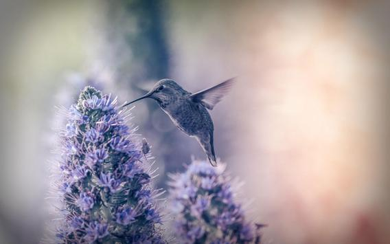 Hummingbird Live Wallpaper screenshot 5