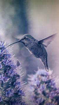 Hummingbird Live Wallpaper apk screenshot