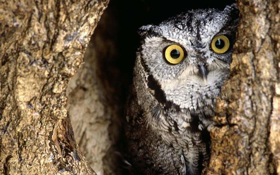Owl Live Wallpapers apk screenshot